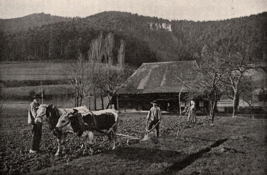 s.5feldbestellung-schwarzwald