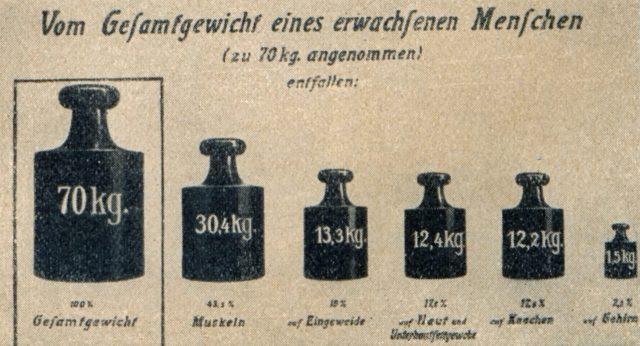 die-woche-11-band-1-s.1103_gewichtsverteilung-der-organe-des-menschl.-koerpers