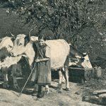 Vergessene Zeugen des Alpenraums